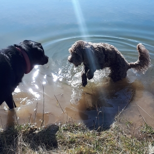And we have a dog bone shaped swimming pond too!