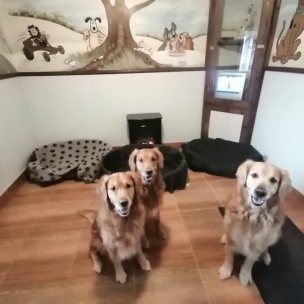 Rooms big enough for several large dogs